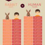 อายุกระต่าย