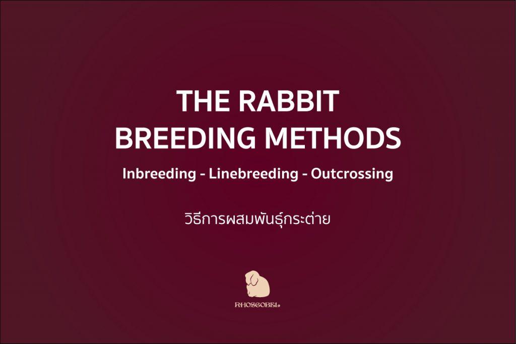 วิธีการผสมพันธุ์กระต่าย